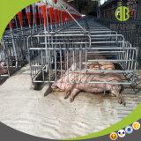 Sistema que introduce auto del encadenamiento durable del cerdo acogido con satisfacción por la granja de cerdo moderna