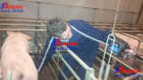Scanner veterinario di ultrasuono di Digitahi equino, bovino, canino, Faline, lama, ecc