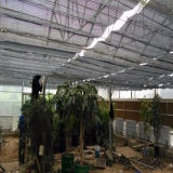 シェーディングシステム温室の中の中国の農業