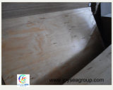 Comercial Venta caliente Pino radiante se enfrentan a la madera contrachapada con alto grado