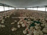 Estructura de acero de Instalación rápida de las aves de corral pollo la construcción de casas prefabricadas