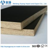 WBP Glue를 가진 포플라 Core Black Film Faced Plywood