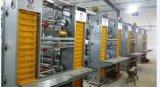 Cage de couche de matériel de volaille de quatre ou cinq rangées