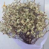 Véritable Touch séchées préservés Statice Limonium des fleurs pour la décoration de mariage