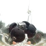 Der Teufel heiligt kreatives Art-Glas-rauchende Wasser-Rohre (ES-GB-265)