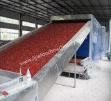 Kartoffelchip-/Kelp-Silk Ineinander greifen-Riemen-Heißluft-Trockner