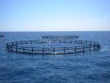 PE釣ケージの海Aquaculatureのための深海の浮遊魚のケージ