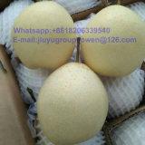 Grado Alimenticio Nueva Cosecha de calidad superior pera