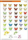 人工的な羽の蝶(FT8001)