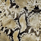 Kingtop Animal Snake Skin Deisgn 0.5 m de large Imprimable Water Printing Printing Film hydrographique pour Hydro Dipping with PVA Material Ktpf5090