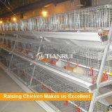 Оборудование фермы цыпленка с горячим гальванизированным цыпленком слоя младенца