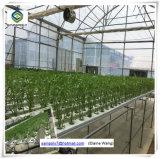 Estufa de vidro do frame de aço do alume para flores com sistemas hidropónicos