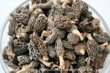 2018hot che vende i funghi di alta qualità delle spugnole