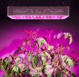 [1500و] [لد] معمل مصباح عرنوس الذرة يشبع ينمو طيف [لد] إنارة