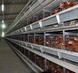 Banheira de venda de ovos industriais metálicas personalizadas que Galinheiro Capoeira House