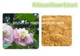 Extracto de la flor del hibisco del ingrediente del 100%/polvo sin procesar naturales de los polifenoles