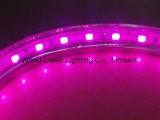 110V/220V Hight 전압 밧줄 Lgiht의 높은 광도를 위한 분홍색 색깔
