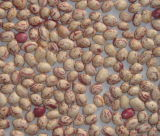 軽い斑入りの腎臓豆、丸型