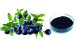 Estratto del mirtillo con 25%Anthocyanin per alimento salutare