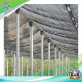100% Virgin HDPE Anti-Bird Net pour l'agriculture Netting