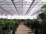 Folhas da telhadura do policarbonato de China Markrolon para a casa verde