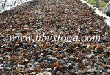 Parte superiore della fabbrica che vende fungo nero, orecchio di legno
