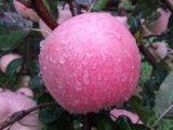 Estrella Apple roja deliciosa fresca quebradiza