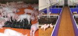 De Dierlijke Plastic Bevloering Met latjes van varkens voor het Huis van de Geit voor Biggetje