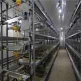 Le poulet de qualité/couche de prix bas met en cage la ferme avicole