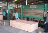 El contrachapado para Deoration/Comercial de la madera contrachapada Bintago Álamo/Core/4*8FT