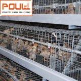 Jaula DE Pollo de Kooi van de Kip van de Automatic Batterij van de Jonge kip voor Kuikens van de Kip/van de Baby van de Dag de Oude