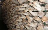 Hohe Leistungsfähigkeits-und Leistungs-Sterilisator für Pilz