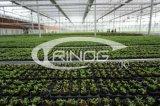 Heißer Verkaufs-Glasgewächshaus für die Landwirtschaft