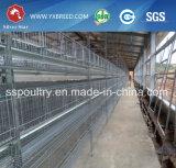 Système automatique de cage de couche de poulet pour la Zambie