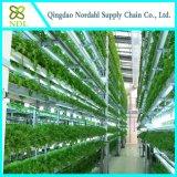 Substratos hidropónicos comerciales para la cosecha de tomate
