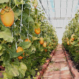 Hot Sale Engrais organique au potassium et aux acides aminés