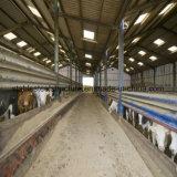 Het Voeden van de koe de Structuur van het Staal van de Industrie met Modern Ontwerp wordt afgeworpen dat