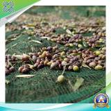 Die olivgrüne Plastikfiletarbeit für Schutz-Pflanzen und montieren Früchte