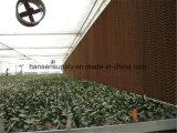 Garniture humide de refroidissement de l'équipement de serre chaude de mur pour la Malaisie