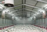 30 años del edificio de casa de pollo de acero