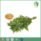 反細菌のセンナの葉のエキスSennosides 8%-20%