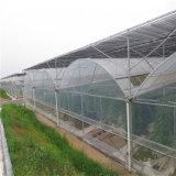 Serra idroponica di vetro galvanizzata di Venlo del blocco per grafici d'acciaio per agricoltura
