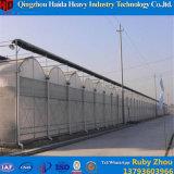 Berufsfabrik-Qualitäts-Plastikgewächshaus