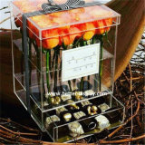 호화스러운 아크릴 초콜렛 선물 수송용 포장 상자