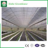 Serre chaude hydroponique de feuille de polycarbonate de système pour l'agriculture moderne