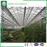 꽃 과일 야채 성장하고 있는 유리제 온실
