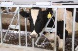 Ближний свет с возможностью горячей замены оборудования Headlock оцинкованного скота крупного рогатого скота/животноводство забора/панели подачи