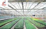식물성 설치를 위한 Venlo 유형 유리제 온실