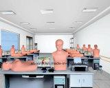 Auscultationの人体摸型、X-YTcz001 Auscultationの人体摸型