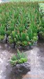 Plantas y flores artificiales de la planta suculenta